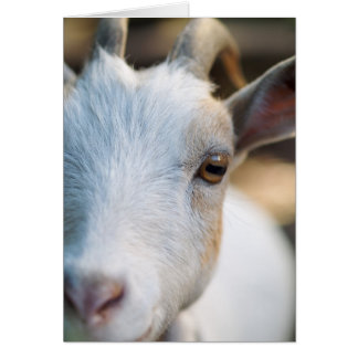 """""""Niza la cabra, encima del cierre """" Tarjeta Pequeña"""