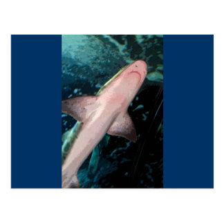 NJ Shark CB Postcard