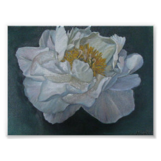 No 29 Peony Indiana State Flower Poster