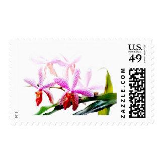 No. 4 de la orquídea sellos