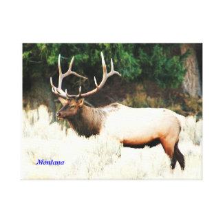 No # 813 - 6 Point Royal Bull ELK. Canvas Print