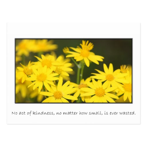 No act of kindness is ever wasted postcard