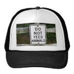 No alimente a animales el gorra