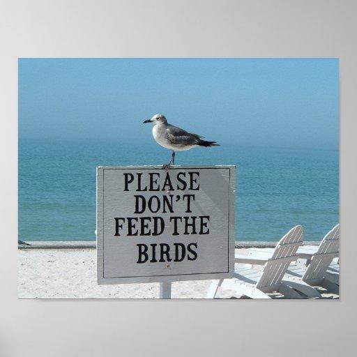 No alimente los pájaros póster
