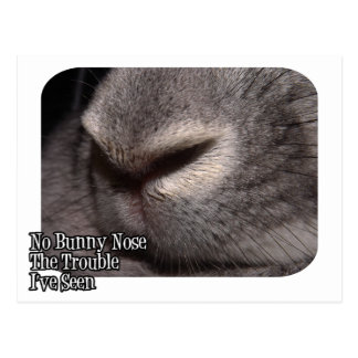No Bunny Nose the Trouble I've Seen Postcard