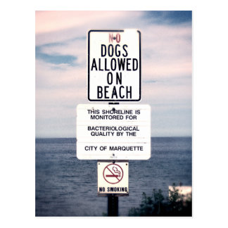 No Dogs Allowed On Beach Postcard