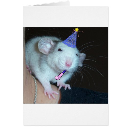 ¡No es un fiesta hasta una rata aparece! Tarjeta