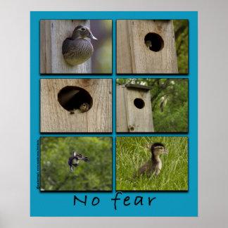 """NO FEAR"" Wood Ducks Fledging Poster"