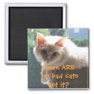 No hay malos gatos. ¿Conseguido lo? Imán Cuadrado