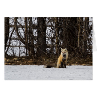 No. hermoso 4 del Fox rojo Tarjeta De Felicitación