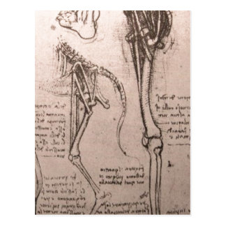 No higher resolution available. Leonardo_anatomy_o Postcard