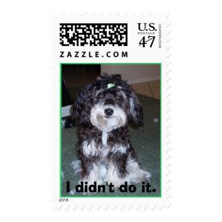 """""""No lo hice"""" sello del perro"""