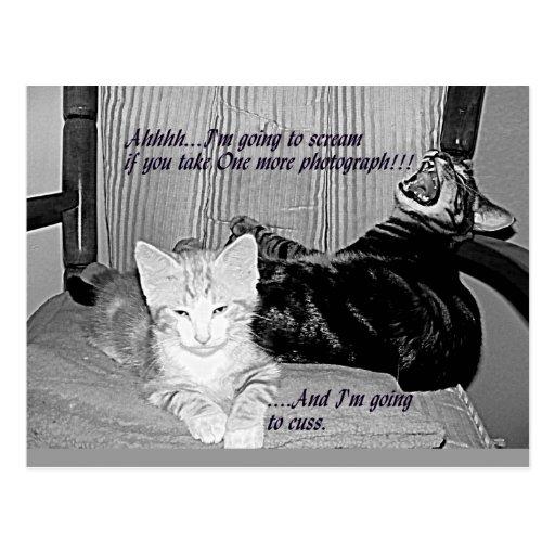 No más de postal del gatito de las fotos