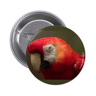 No me llame Polly. Pin Redondo 5 Cm