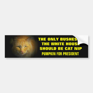 No More Bush In White House..Pumpkin for President Bumper Sticker