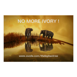 NO MORE IVORY ! POSTER