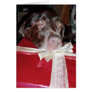 ¡No olvide a sus mascotas para el navidad Felicitación