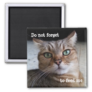 No olvide alimentar un gato imanes
