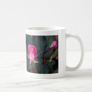 ¡No olvide parar y oler los rosas! Taza