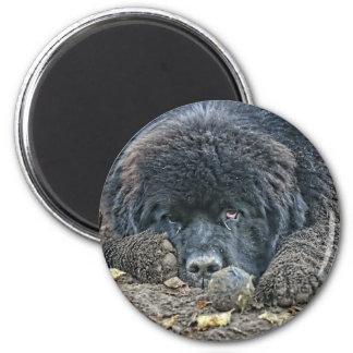 No one will play with me. 2 inch round magnet