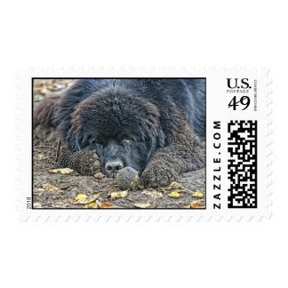 No one will play with me. postage stamp