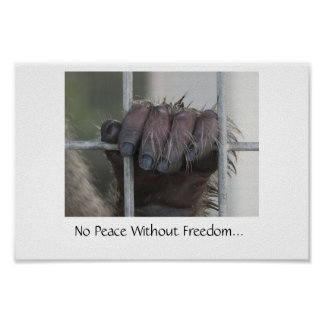 No Peace Without Freedom Poster