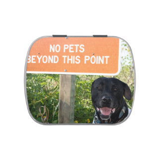 no pets with dog sign at beach funny animal image candy tin