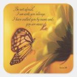 No sea mariposa religiosa asustada en margarita