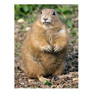 No soy gordo, yo soy postal mimosa
