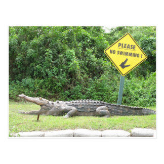No Swimming! Postcard