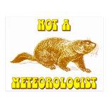 No un meteorólogo Groundhog Tarjetas Postales