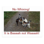 No Whining! Post Card