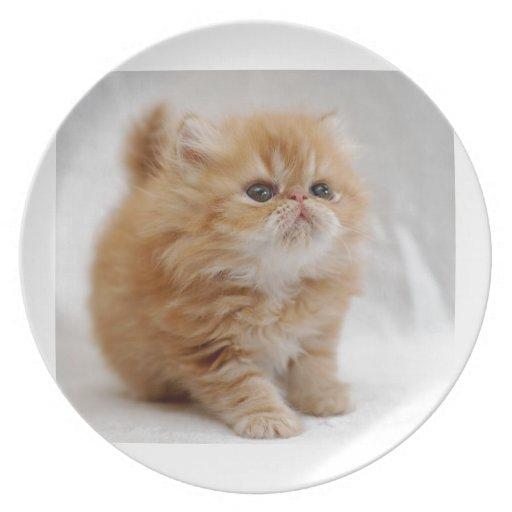 ¡No yo! Gatito persa anaranjado decidido Plato De Cena