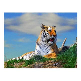 Nobel Tiger Postcard