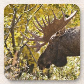 Noble Bull Moose Coasters