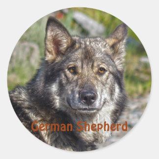 Noble German Shepherd Wolf-like Pose Classic Round Sticker