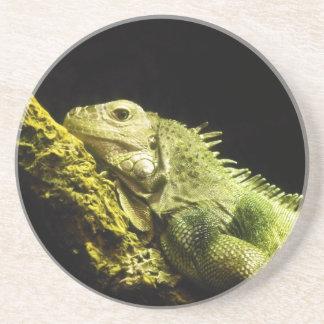 Noble Iguana Coaster