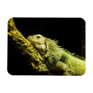 Noble Iguana Magnet