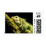 Noble Iguana Postage