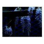 Noche azul extraña hermosa de las glicinias de la postales