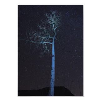 Noche de Aspen Cojinete