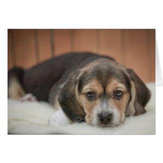 Noche del camisón del perrito del beagle tarjeta de felicitación