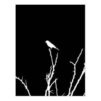 Noche del pájaro cantante postal