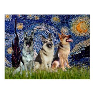 Noche estrellada - 3 pastores alemanes tarjeta postal