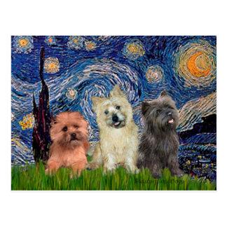 Noche estrellada de los terrieres de mojón (tres)  tarjeta postal