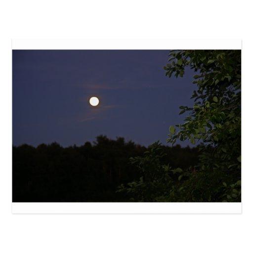 noche peacful postal