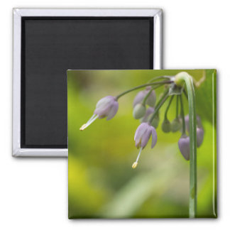 Nodding Wild Onion Lilac Purple Wildflower Magnet
