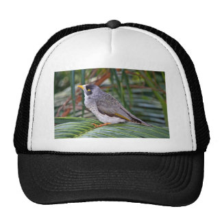Noisy Miner Bird, Adelaide, Australia Trucker Hat