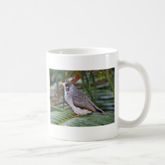 Noisy Miner Bird, Adelaide, Australia Basic White Mug