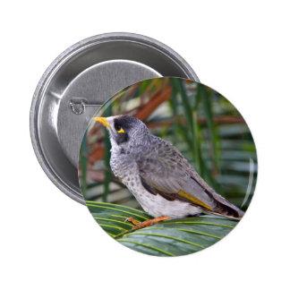 Noisy Miner Bird, Adelaide, Australia Pin